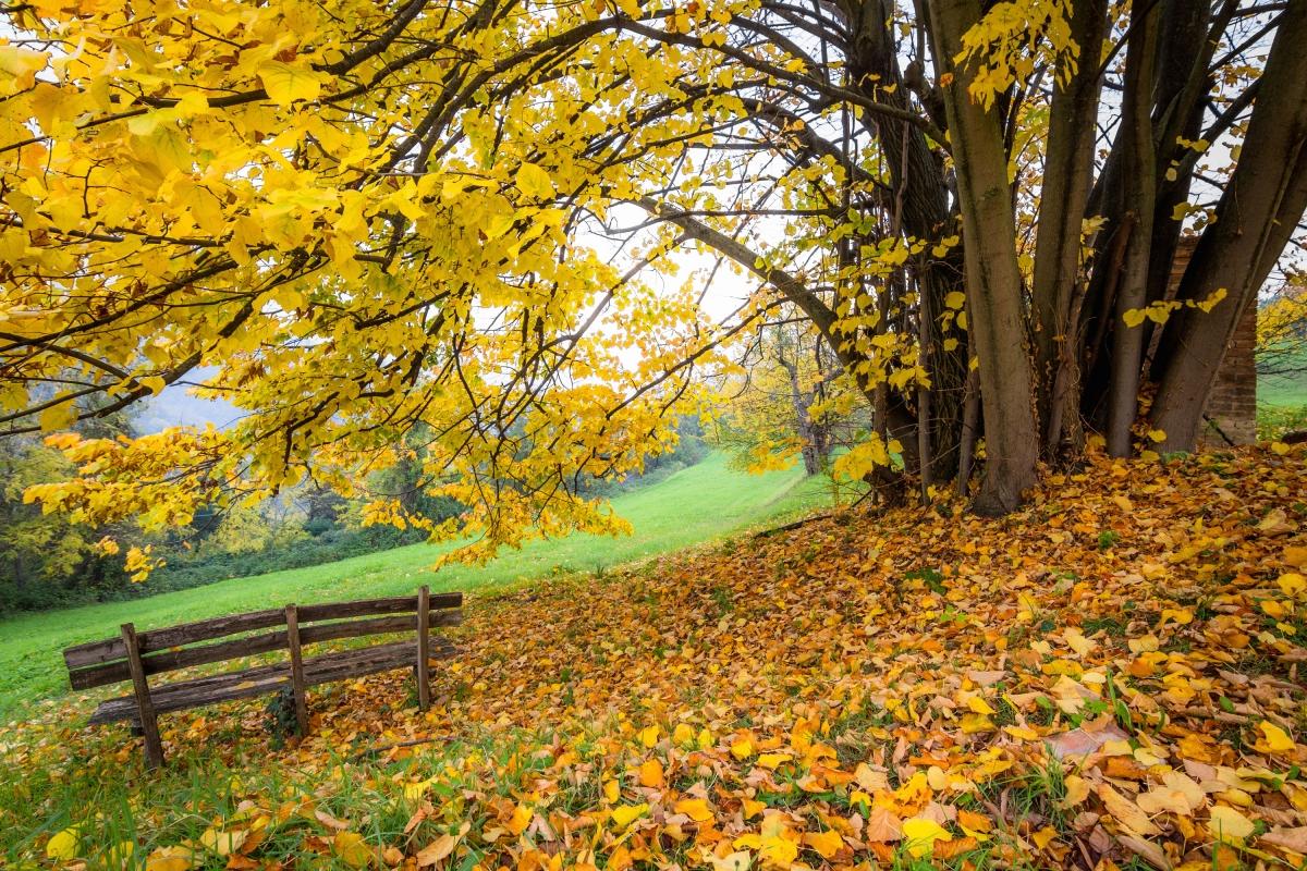 Autumn in Pellegrino Park - Ugeorge - Bologna (BO)