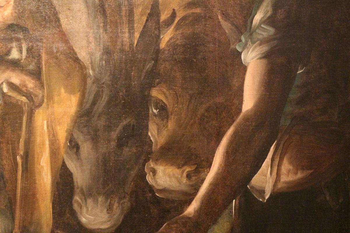 Luca cambiaso, adorazione dei pastori, 1565-70, da s. domenico 07 bue e asinello - Sailko - Bologna (BO)