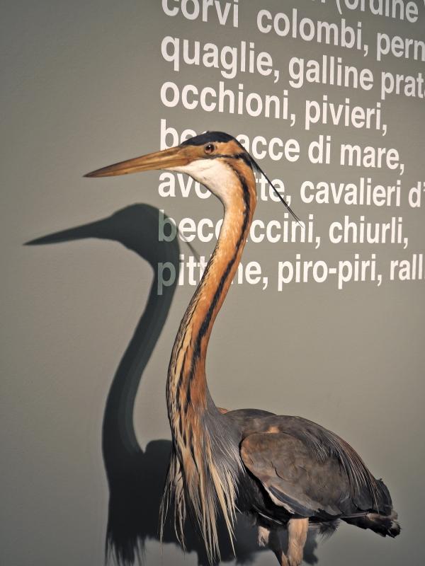Imola Museo Sa Domenico uccello - Bolorsi - Imola (BO)