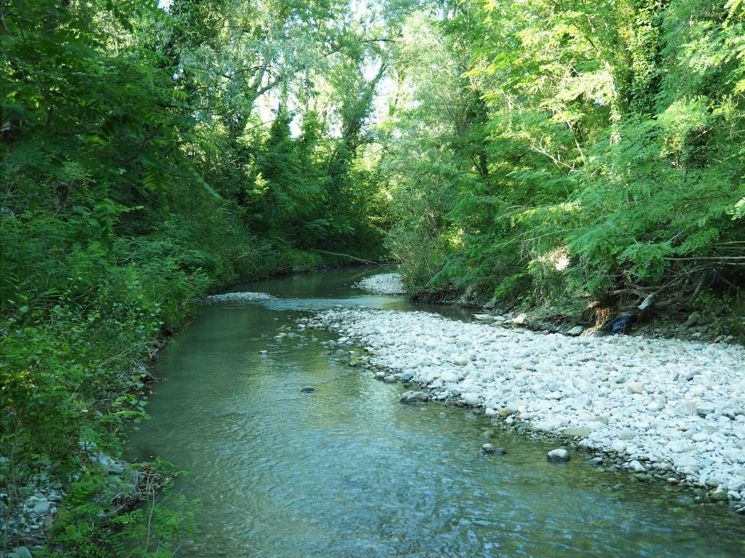 Oasi fluviale del Molino Grande - MarkPagl - San Lazzaro di Savena (BO)