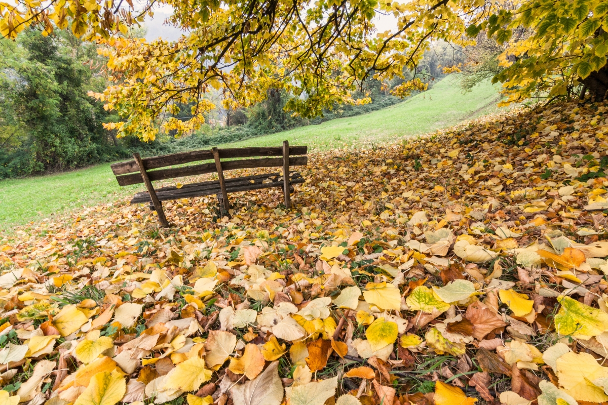 Foglie gialle a Parco S. Pellegrino - Ugeorge - Bologna (BO)