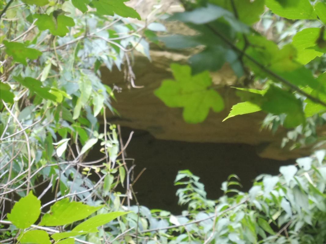 Parco delle Acque Minerali - Maurolattuga - Imola (BO)