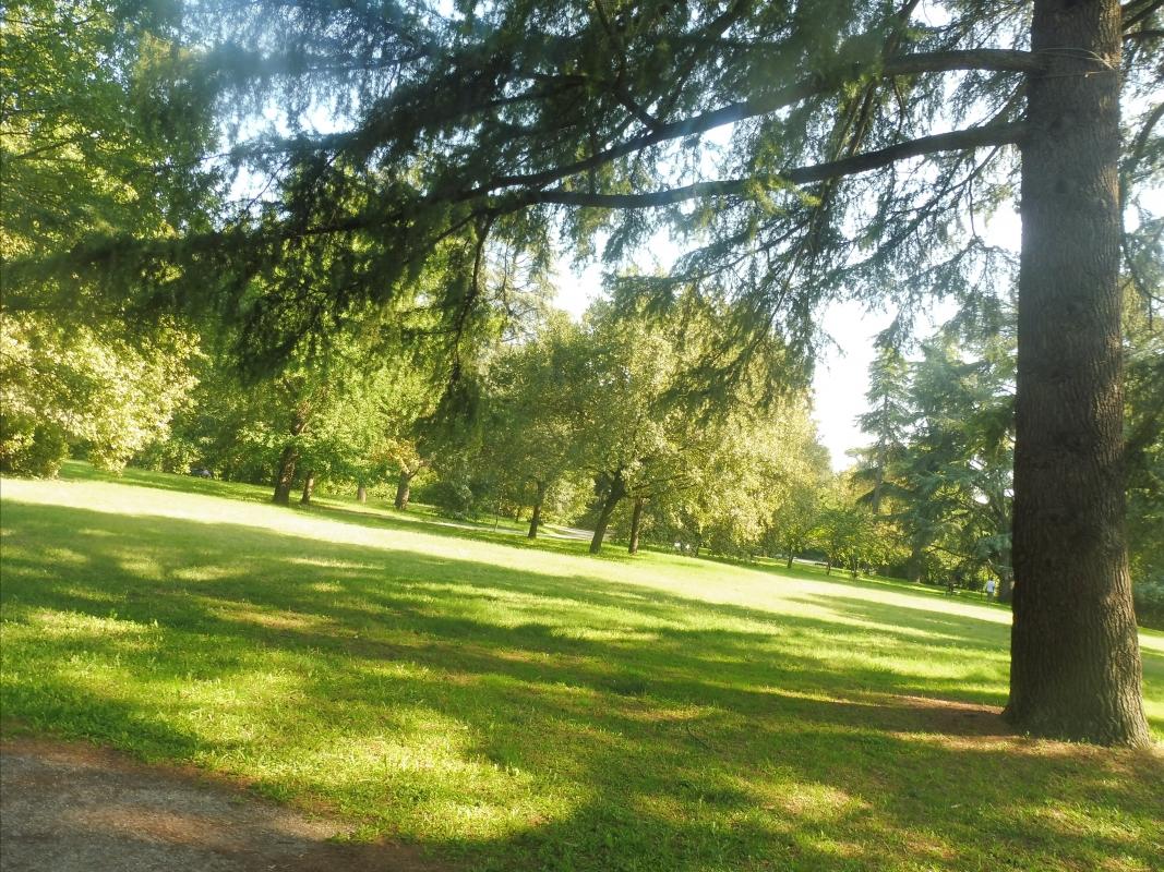 Parco delle Acque Minerali - alberi parco - Maurolattuga - Imola (BO)