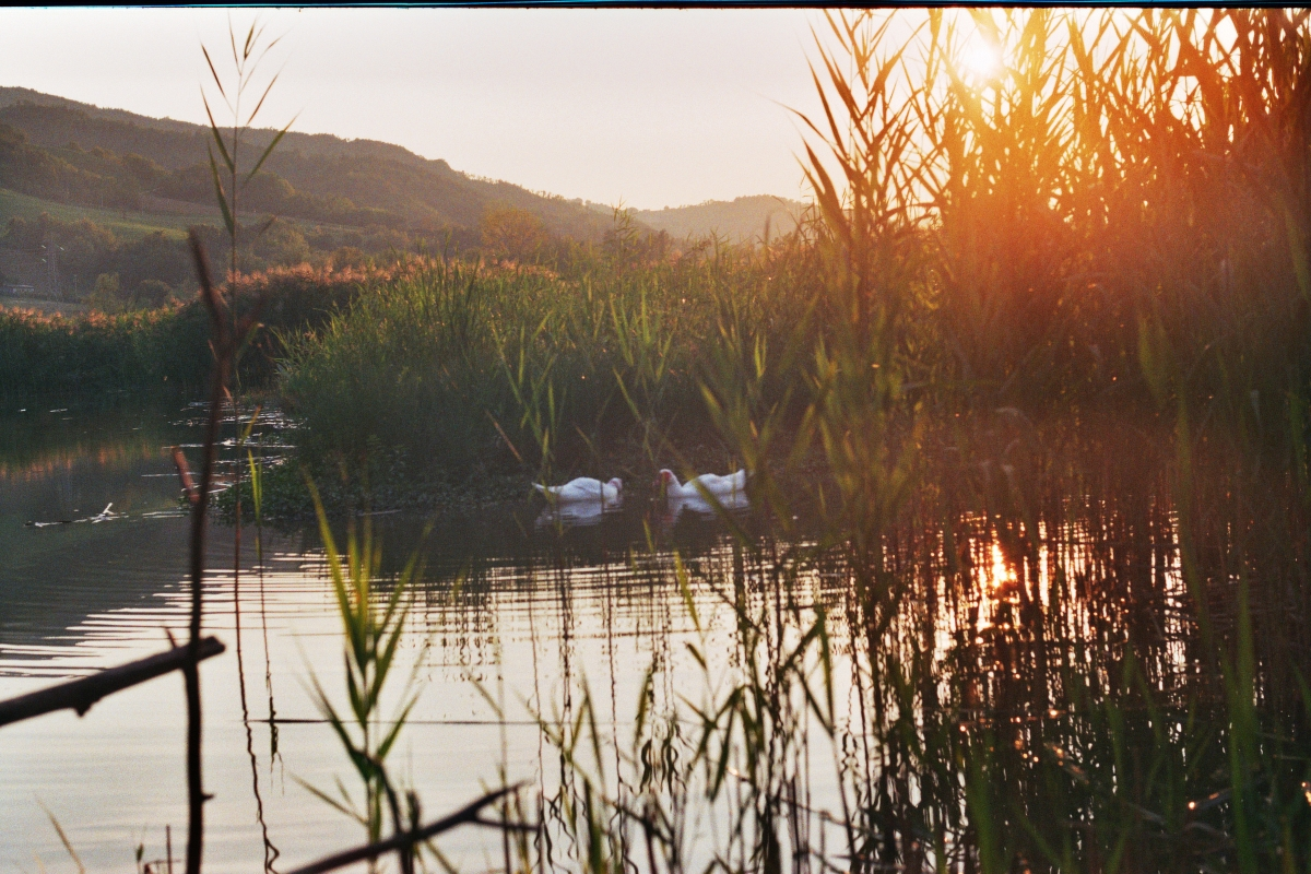 Lago di Quarto particolare - Andrea.andreani - Sarsina (FC)