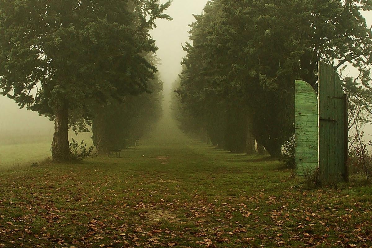 La nebbia avvolge il viale dei cento cavalieri nel parco di Villa Silvia - Luca Spinelli Cesena - Cesena (FC)