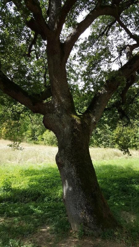 L'albero vicino l'Abbazia - Marco Musmeci - Sarsina (FC)