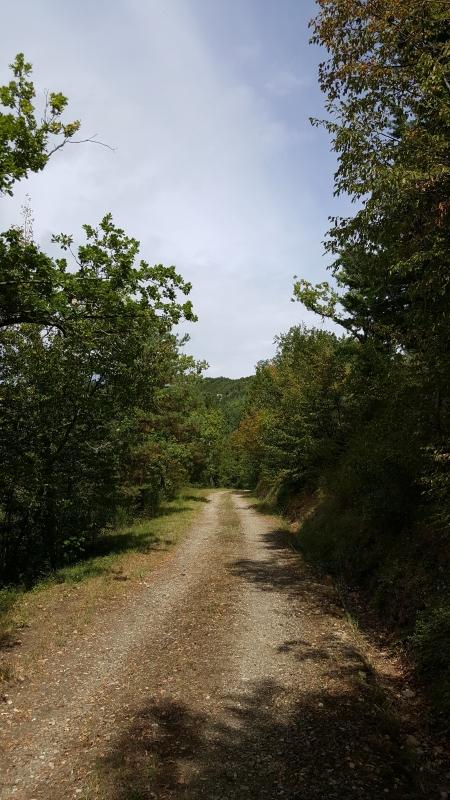 Il sentiero 01 - Marco Musmeci - Sarsina (FC)