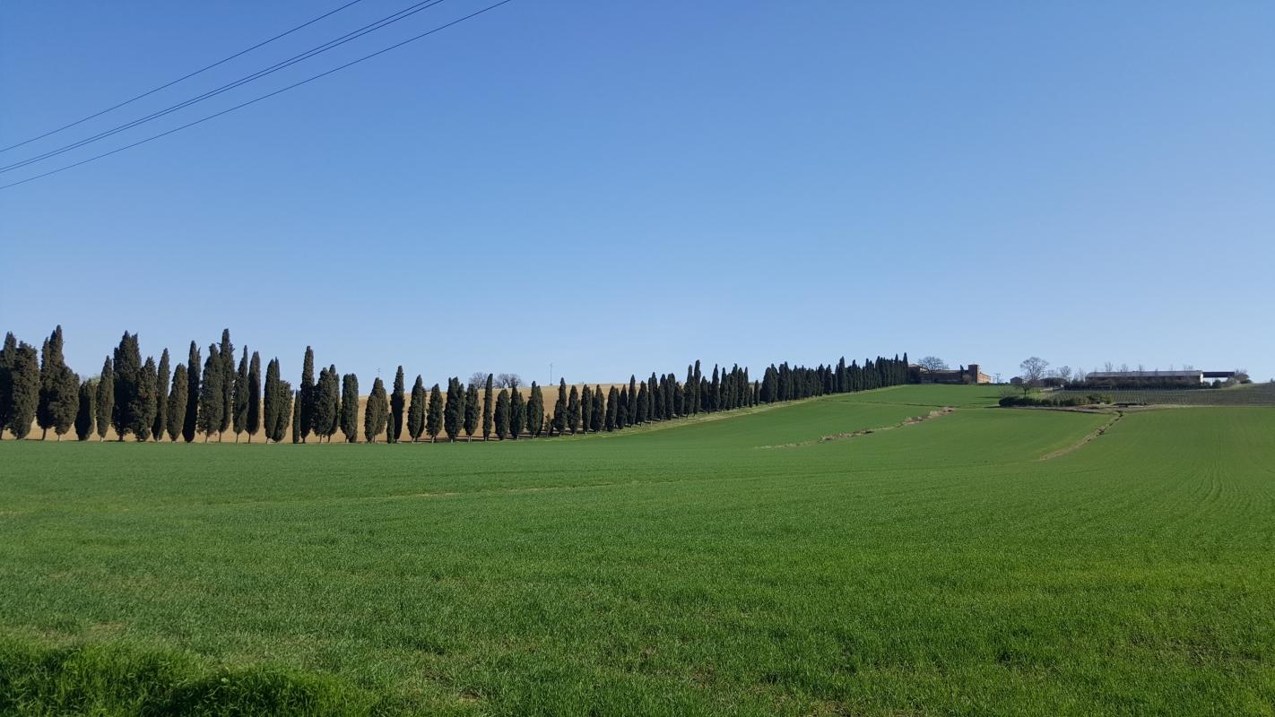 Il viale di cipressi - Marco Musmeci - Savignano sul Rubicone (FC)