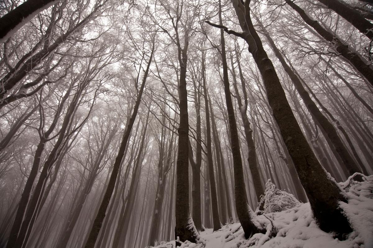 Inverno rigido sul crinale - UmbertoPaganiniPaganelli - Santa Sofia (FC)