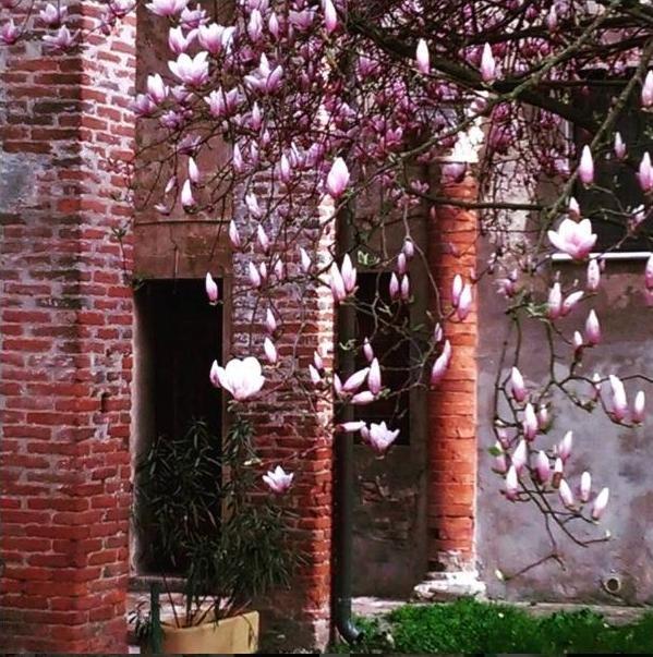 Primavera a palazzo - Alessandro1965B - Voghiera (FE)