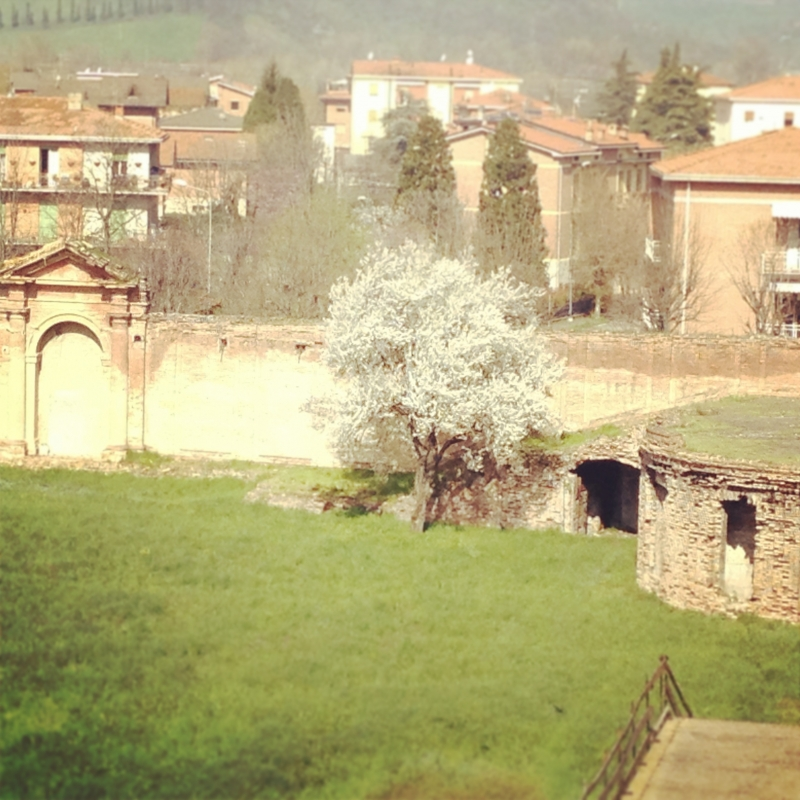 Prima-vera - Chiara Soldati - Sassuolo (MO)