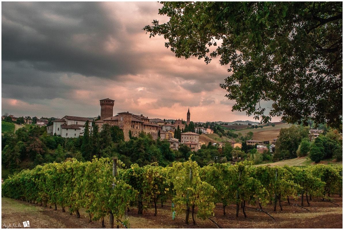 Prima della vendemmia, Levizzano Rangone - Angelo nacchio - Castelvetro di Modena (MO)