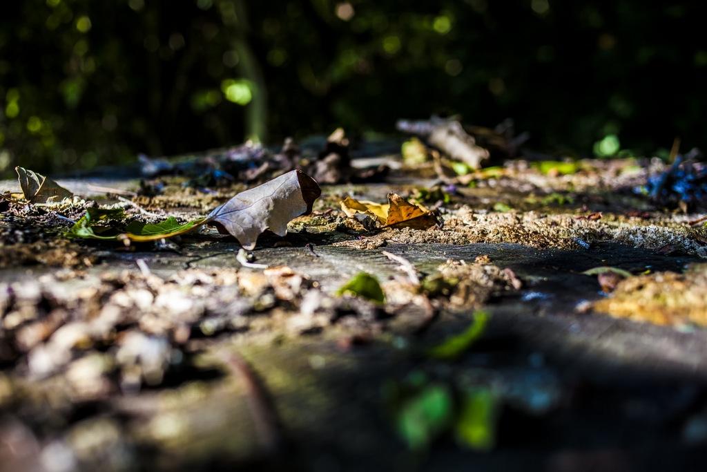 Inizia l'autunno - Oasi torrazzuolo - Giovanna molinari - Nonantola (MO)