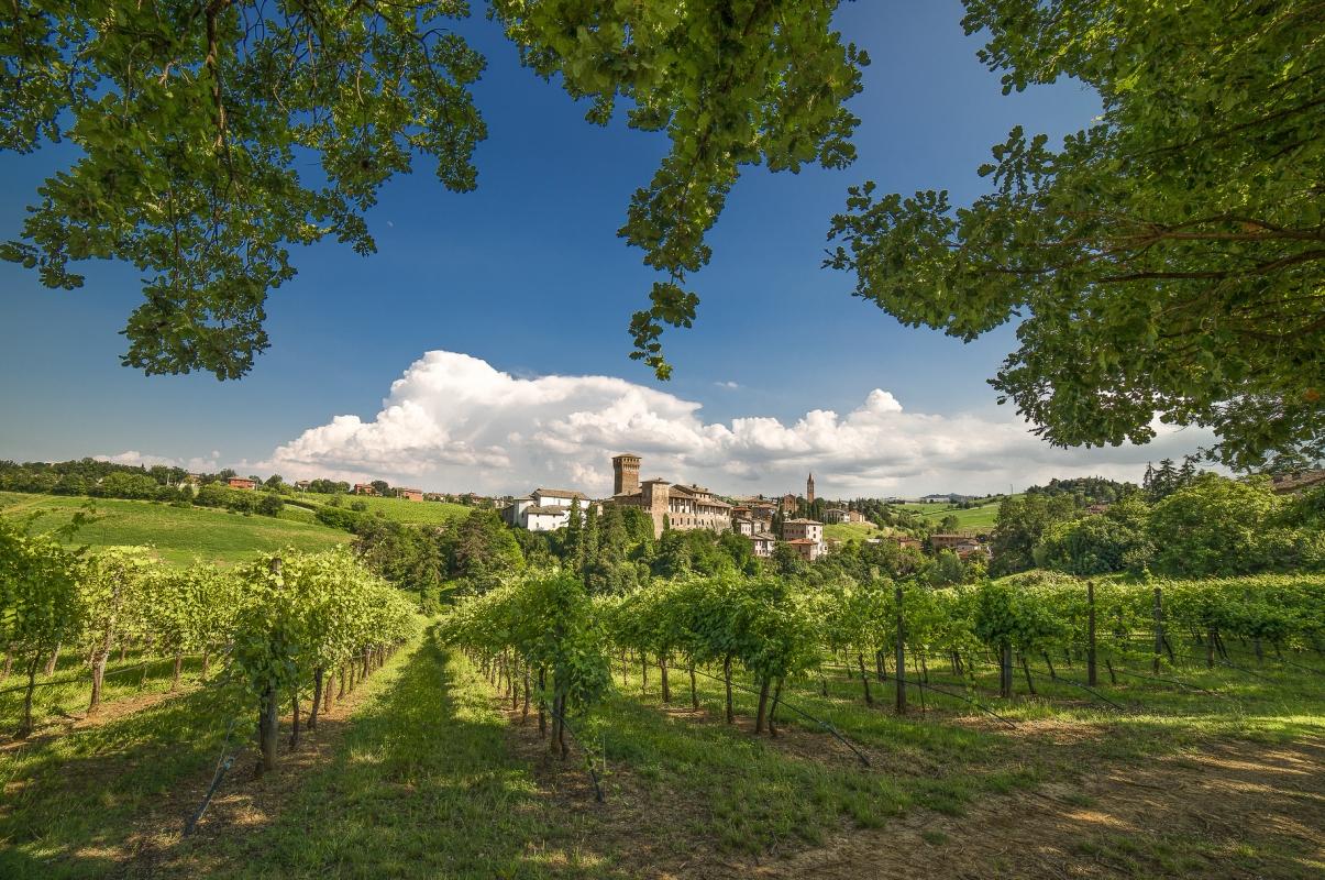 Il castello in versione estiva - Angelo nastri nacchio - Castelvetro di Modena (MO)