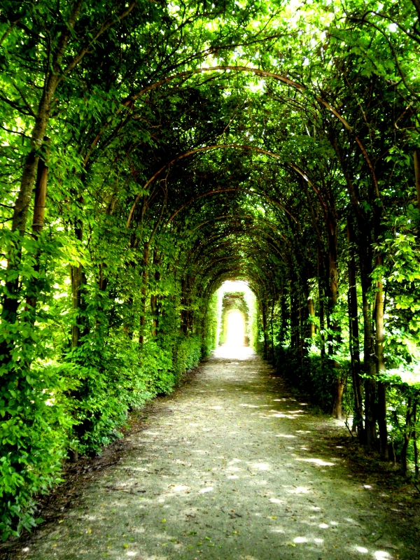 Viale nei giardini della Reggia di Colorno - Roberta Renucci - Colorno (PR)