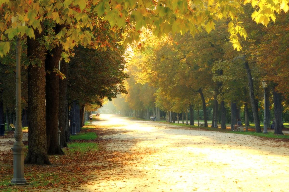 Viale Centrale, Parco Ducale - Parma - GiacomoClickMoceri - Parma (PR)
