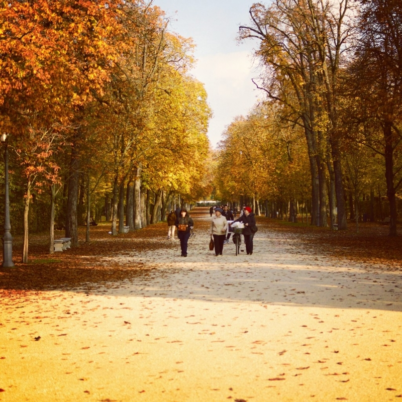 Parco Ducale viale centrale - Alessandra Pradelli - Parma (PR)