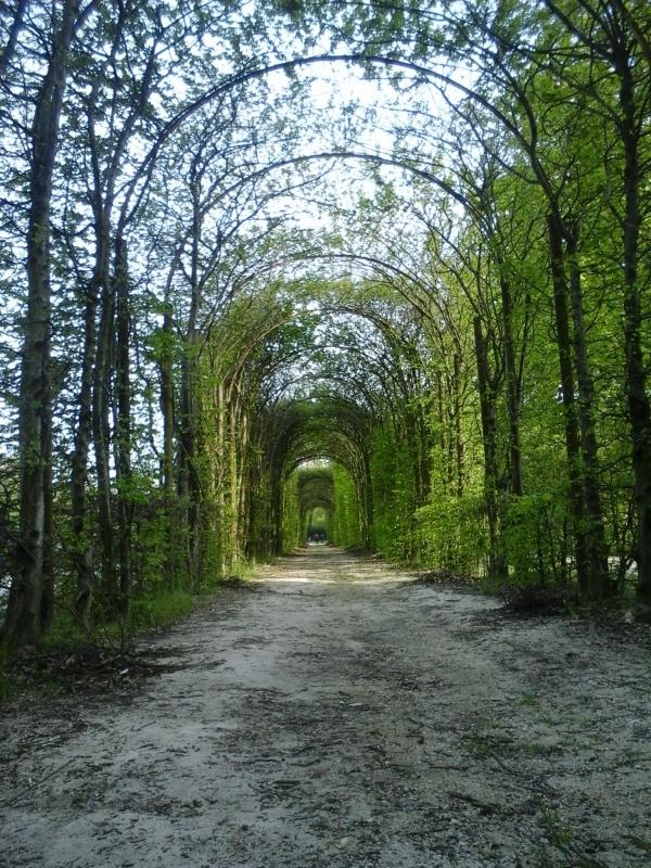 Passeggiata nel giardino storico - Giorgia Lottici - Colorno (PR)