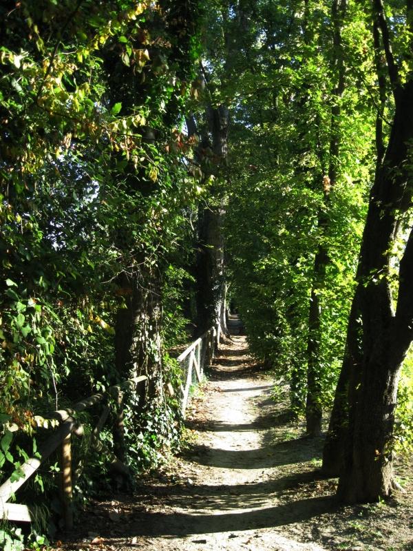Parco del Loto, percorso vicino ai fiori di loto - Sofiadiviola - Lugo (RA)