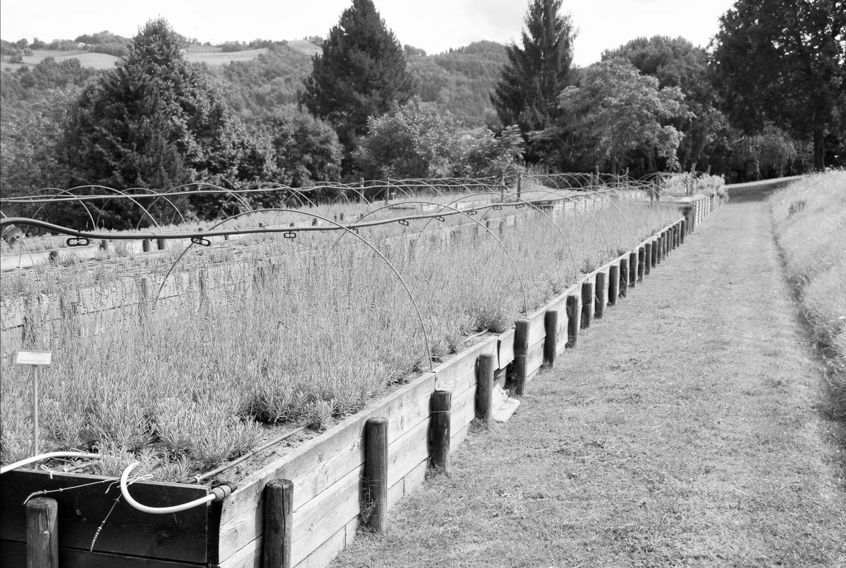 Giardino delle erbe 06 - SveMi - Casola Valsenio (RA)