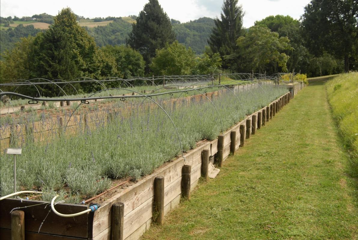 Giardino delle erbe 05 - SveMi - Casola Valsenio (RA)