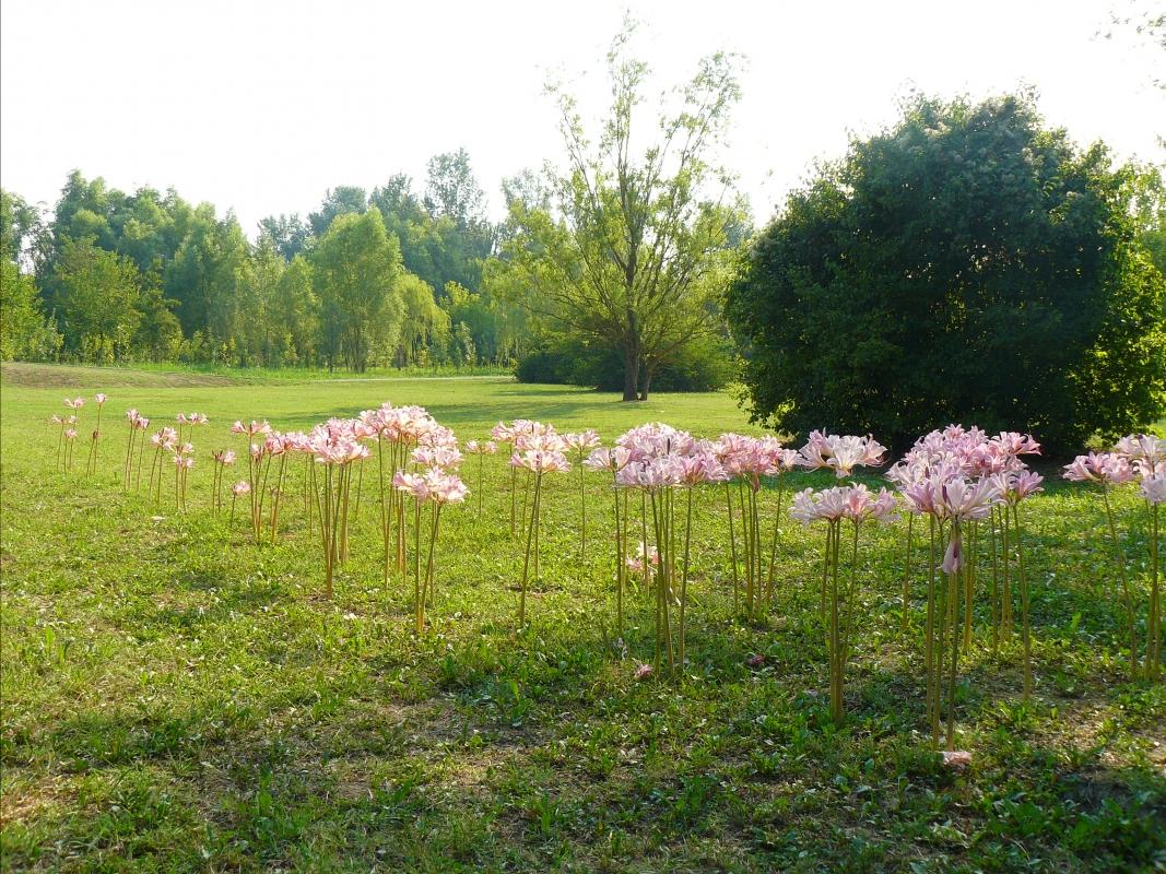 Non solo fiori di loto - Carla Guerra - Lugo (RA)