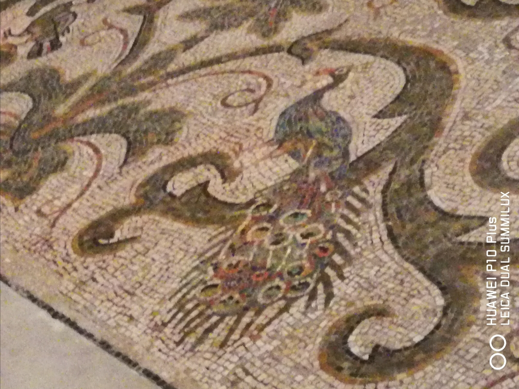 San Vitale - particolare della figura del pavone pavimento musivo abside - LadyBathory1974 - Ravenna (RA)