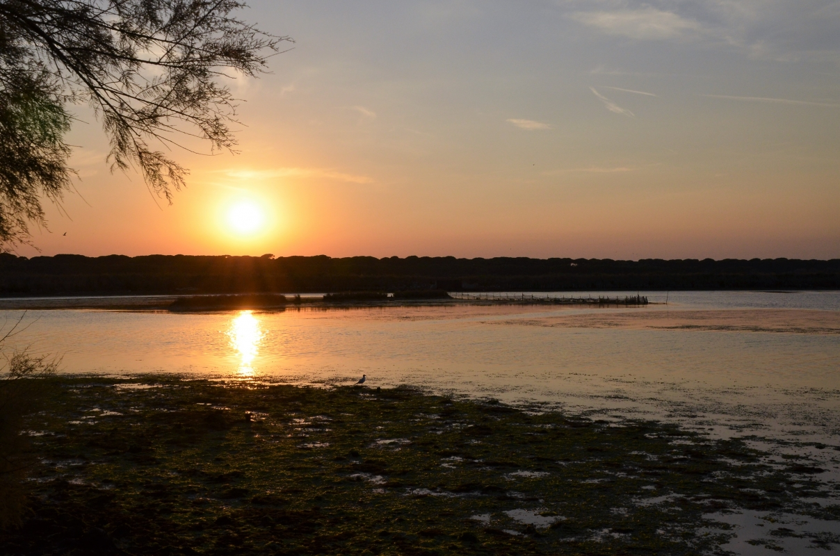 Capanno Garibaldi-vista sulla laguna - Emilia giord - Ravenna (RA)