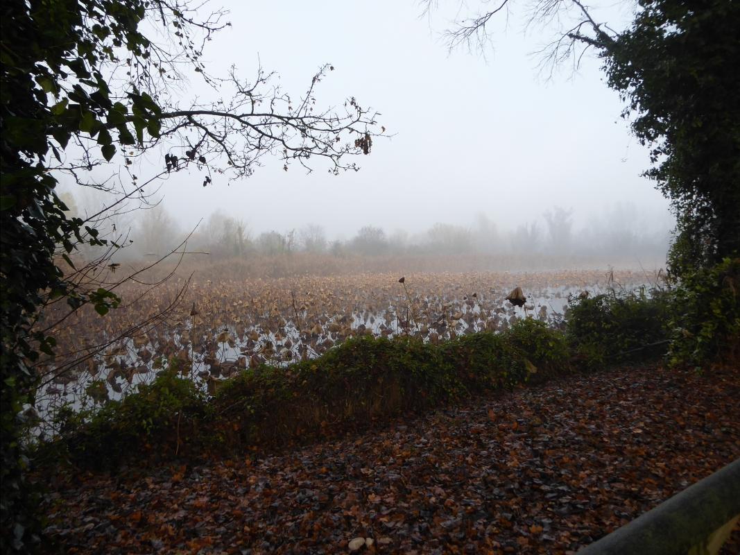Parco in inverno con la nebbia1010321 - Carla Guerra - Lugo (RA)