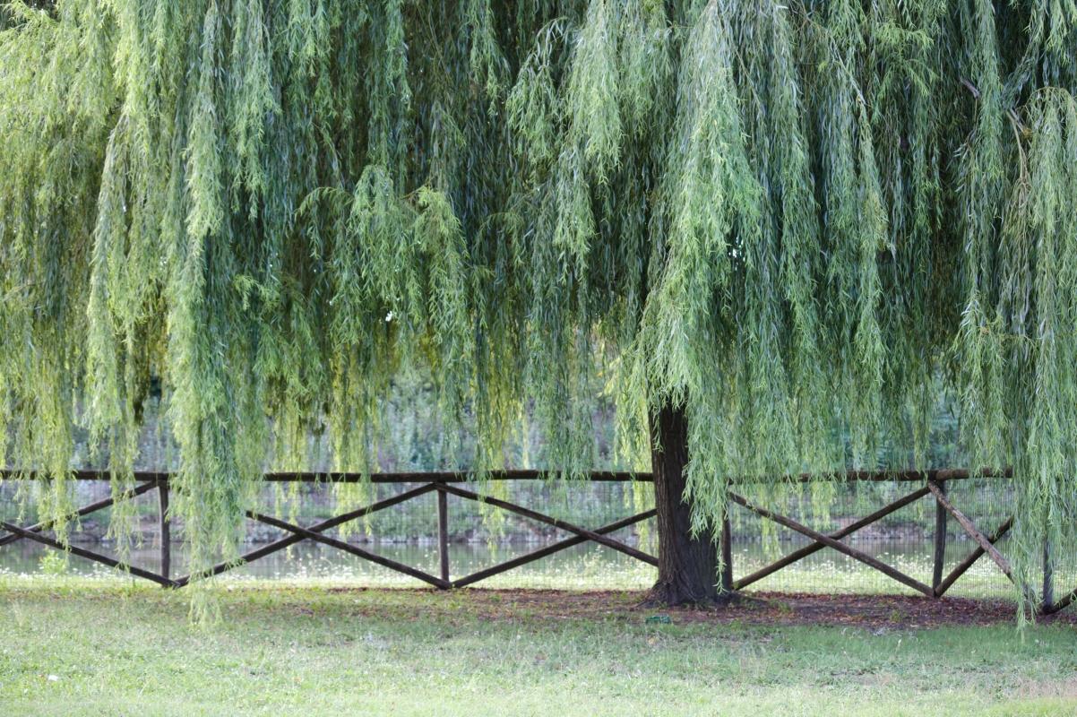Parco Golfera - salice - Stefano.Ronchi.it - Lugo (RA)