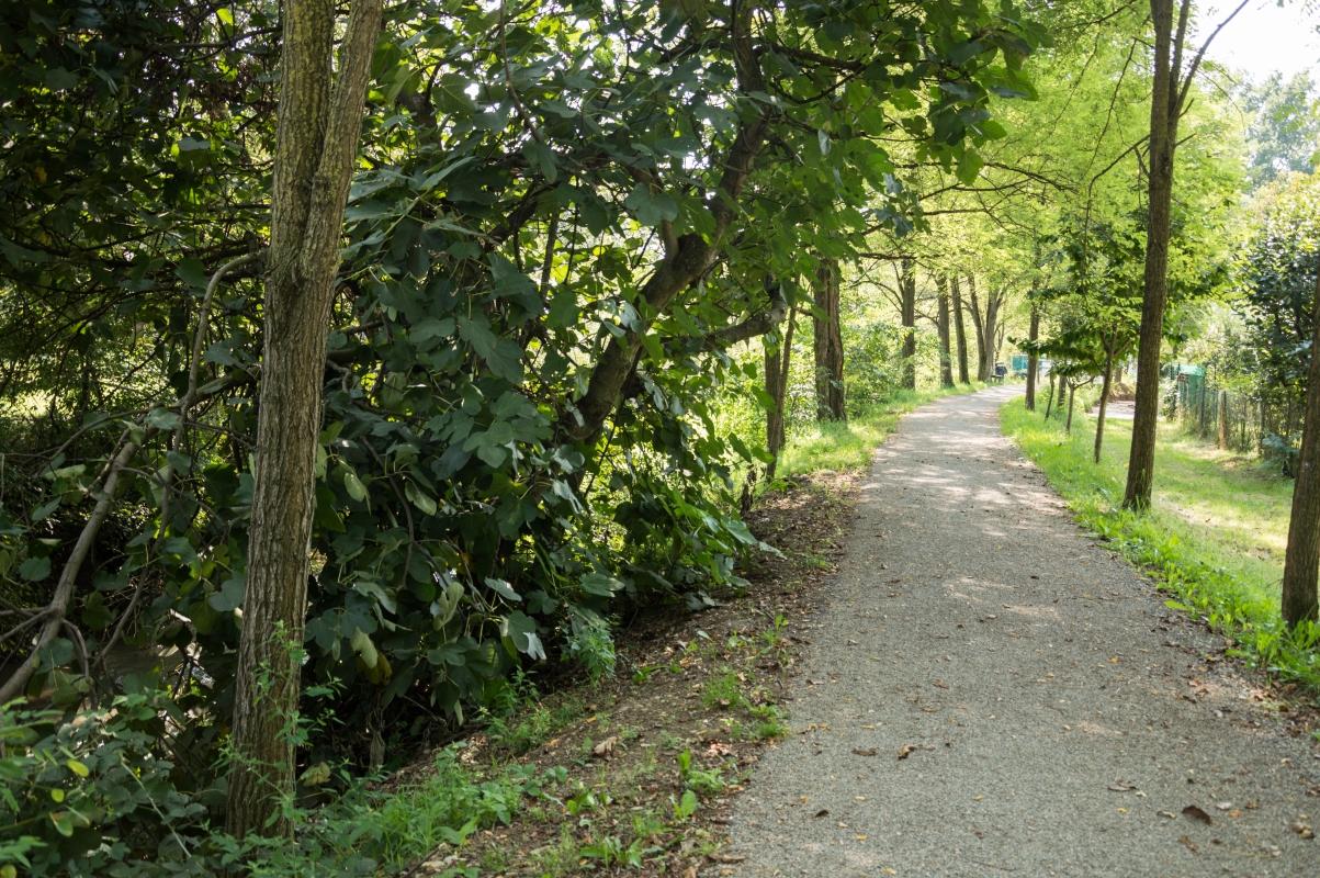 Percorso ecologico delle Acque Chiare - Parco del Rodano (2) - Alessandro Azzolini - Reggio nell'Emilia (RE)
