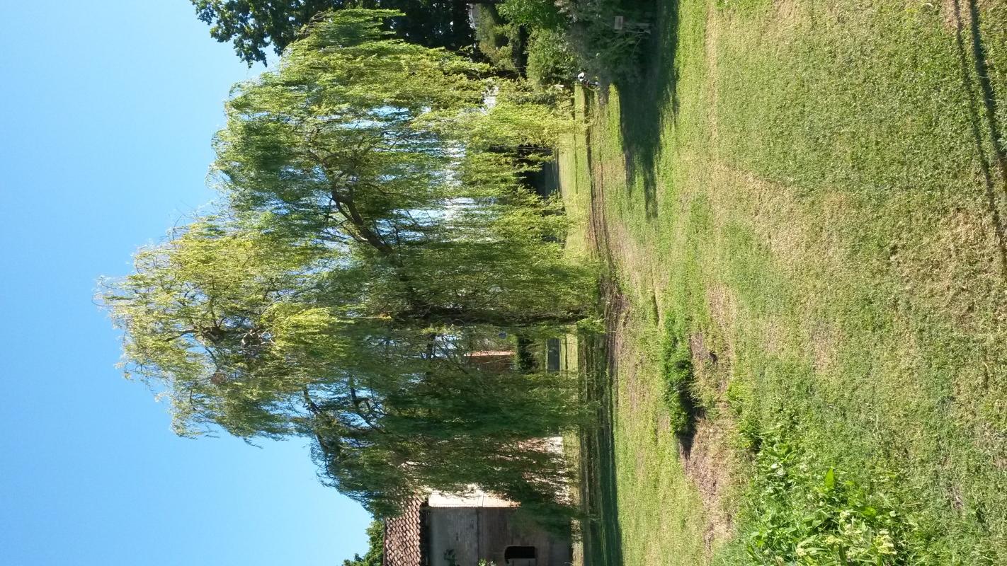 Salice2 - Lauretta666 - Reggio nell'Emilia (RE)