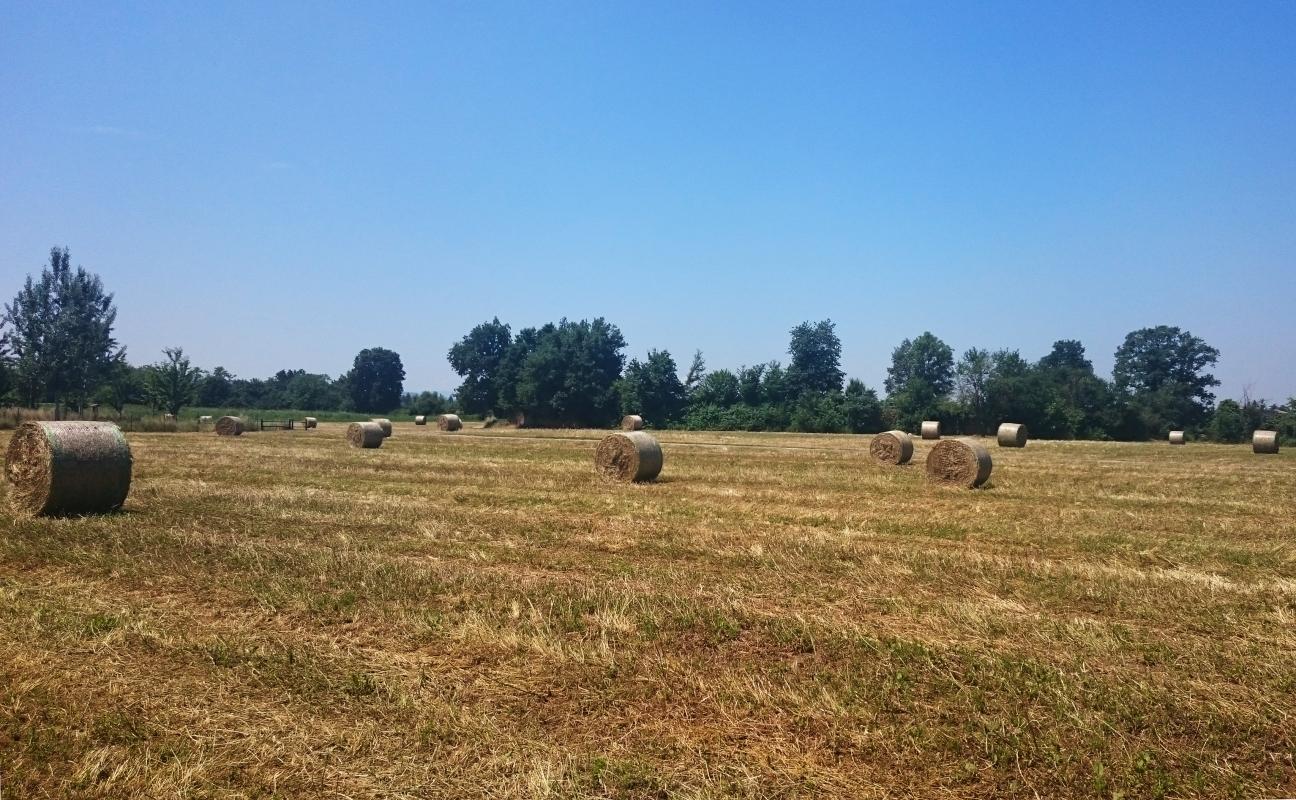 PARCO CROSTOLO RE - ValeriaZeArch - Reggio nell'Emilia (RE)