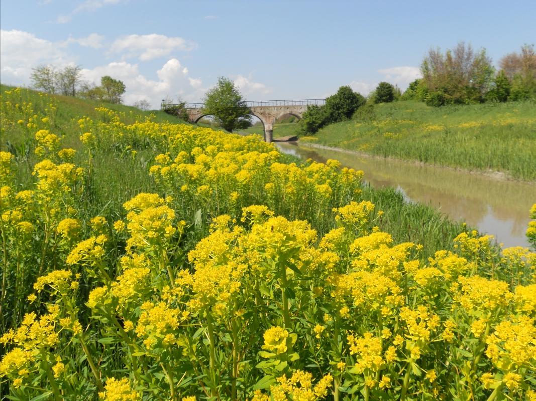 Primavera sul ponte della Gatta con bonifica acque basse reggiane - Claudio Magnani - Reggiolo (RE)