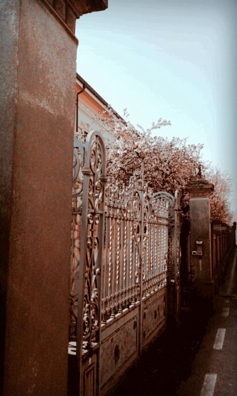 Inizi di primavera all'ex Locatelli - Ceci.melani - Reggio nell'Emilia (RE)