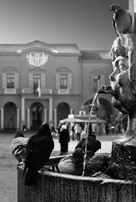 Piccioni in piazza - Fed86ert - Reggio nell'Emilia (RE)