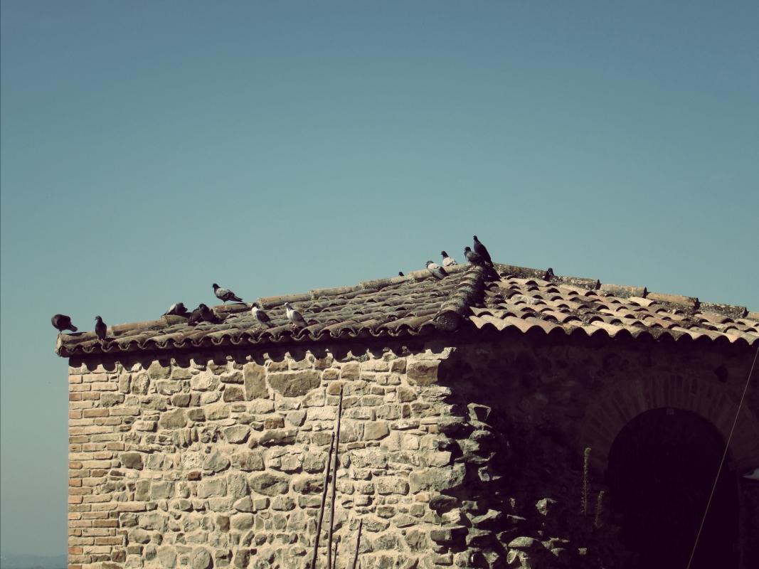 La torre della piccola arena - LaraLally19 - Montefiore Conca (RN)