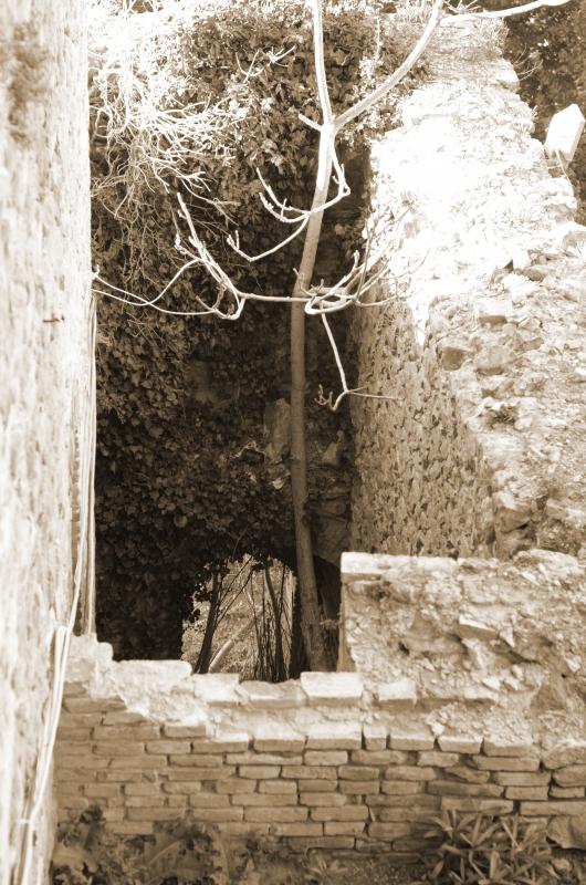 Altre viste - Loris Temeroli - Montefiore Conca (RN)