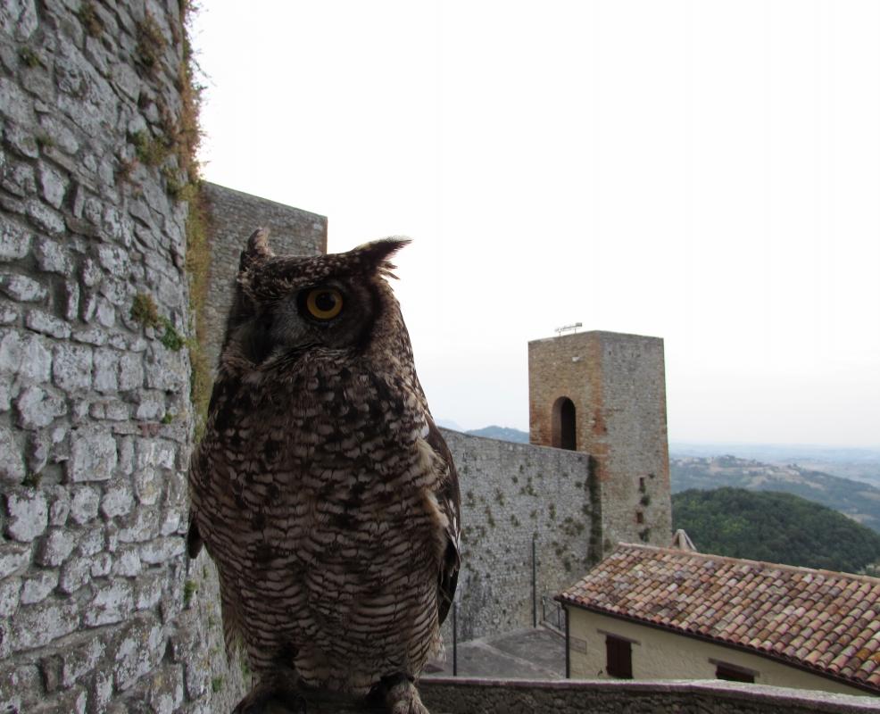 Una antica fortezza con antiche presenze - Larabraga19 - Montefiore Conca (RN)