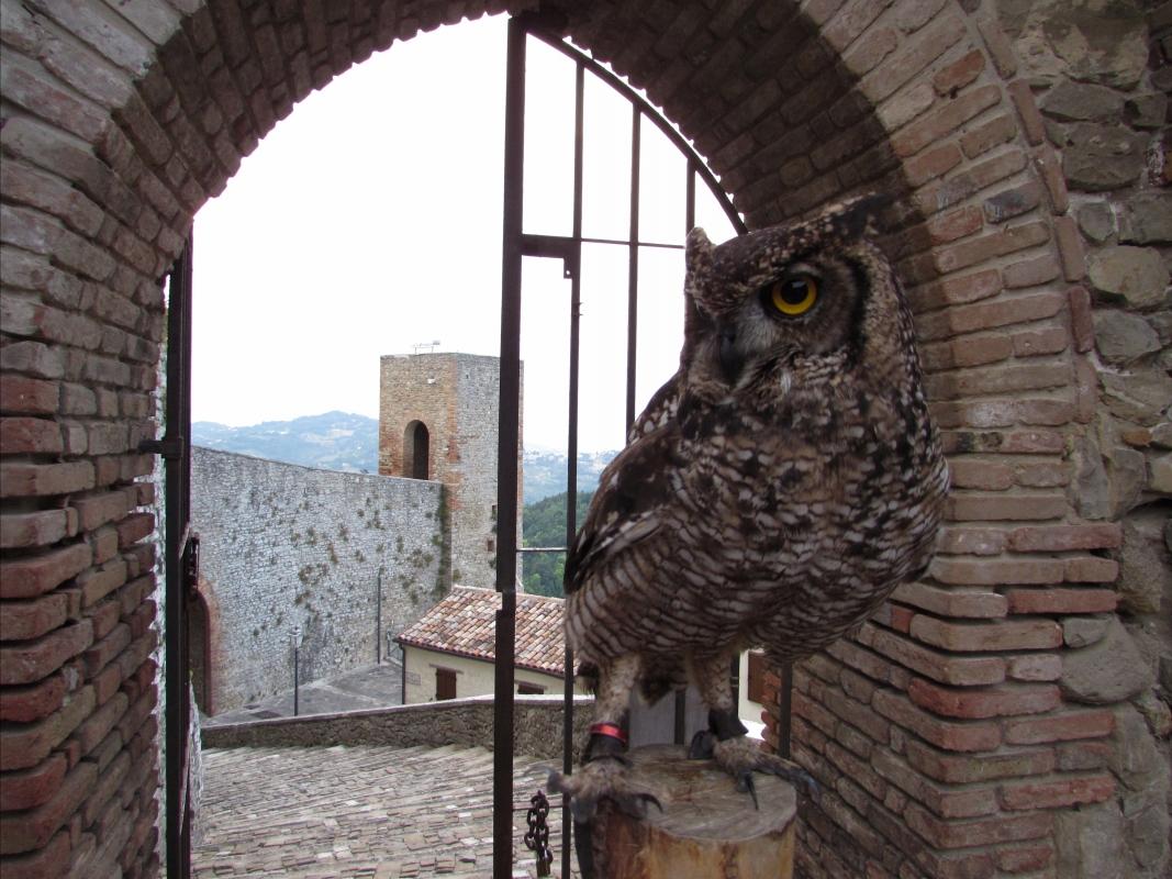 La Rocca e le sue creature ferme nel tempo - Larabraga19 - Montefiore Conca (RN)