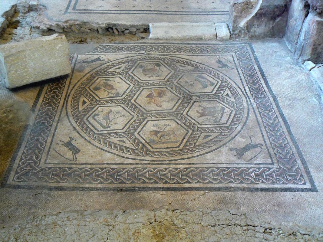 Domus chirurgo mosaici 9 - Paperoastro - Rimini (RN)