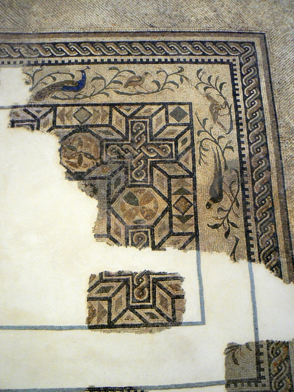 Mosaico domus chirurgo 2 - Paperoastro - Rimini (RN)