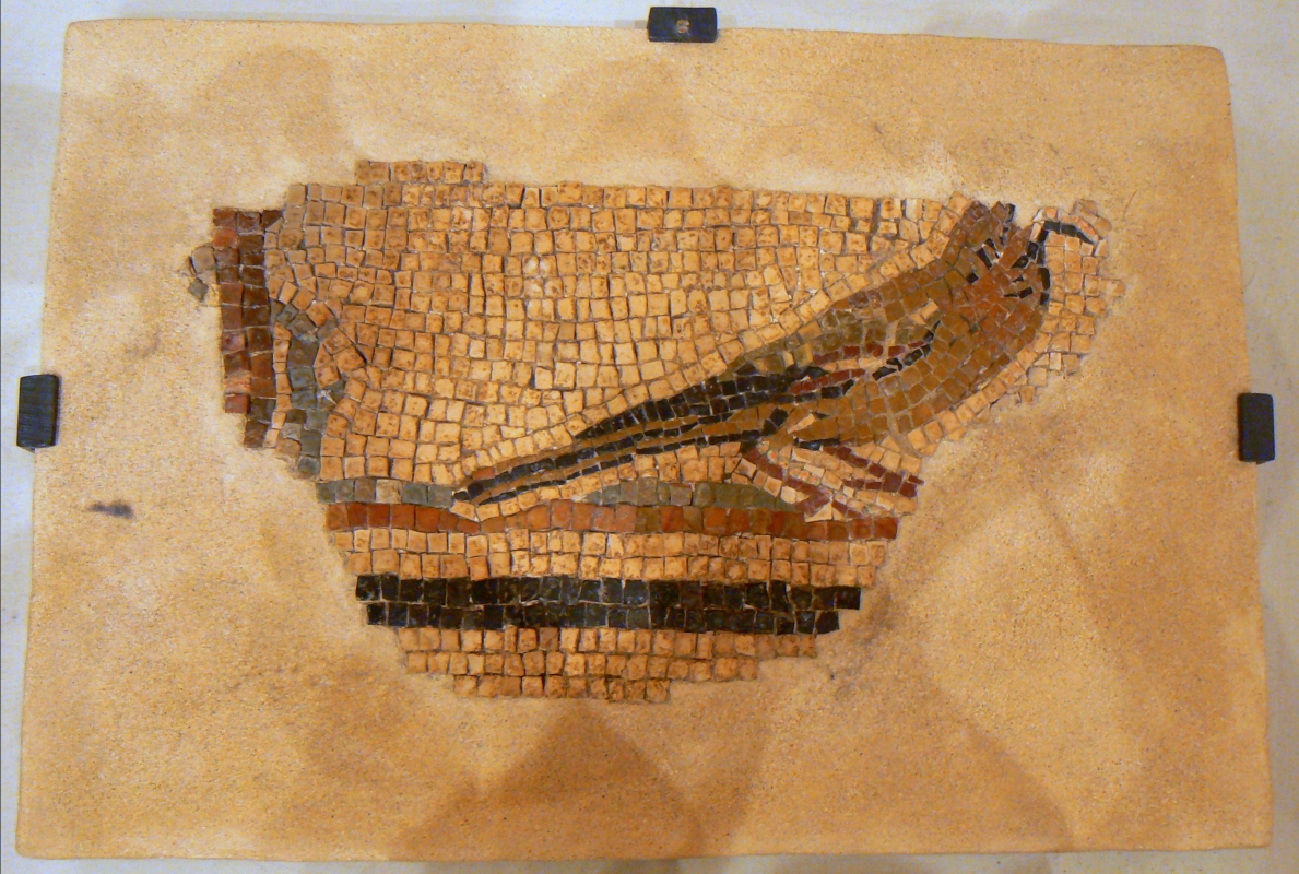 Mosaico domus chirurgo 3 - Paperoastro - Rimini (RN)