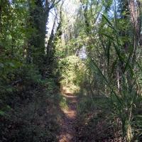 Il sentiero - Albertoc - San Lazzaro di Savena (BO)
