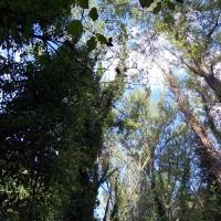 Vista alberi monimentali - Albertoc - San Lazzaro di Savena (BO)
