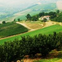 Località Dozza