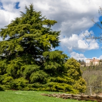 Cedro davanti alla Villa Ghigi all'interno del Parco omonimo