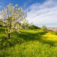Spring in Pellegrino Park - Ugeorge - Bologna (BO)