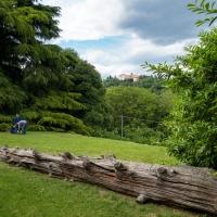 Parco di Villa Ghigi con il grande Cedro e Villa Aldini sullo sfondo - Ugeorge - Bologna (BO)