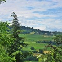 Paesaggio collinare Dozza - Melyssa Costi - Dozza (BO)